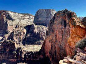 Regarder National Geographic Wild en Direct